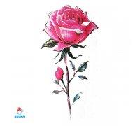 Laikina tatuiruotė Rožė-B22; 10x6cm