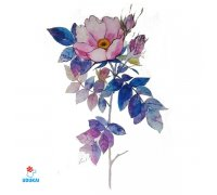 Laikina tatuiruotė Gėlės-F04; 10x6cm