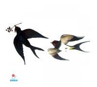 Laikina tatuiruotė Paukščiai-W050; 10x6cm